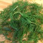 THE DILL-SEEKERS: AN HERB, A MOTHER, MEMORY