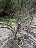 fallen tree 2 aug 2016